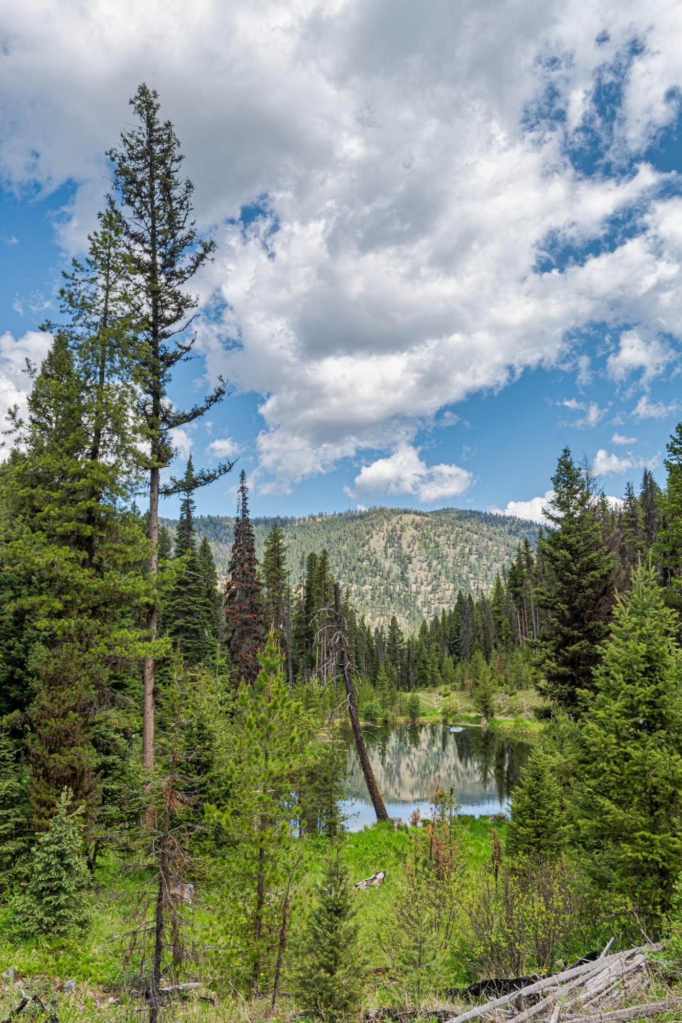 11. Land for Sale at 815 Hughes Creek Road Darby, Montana 59829 United States