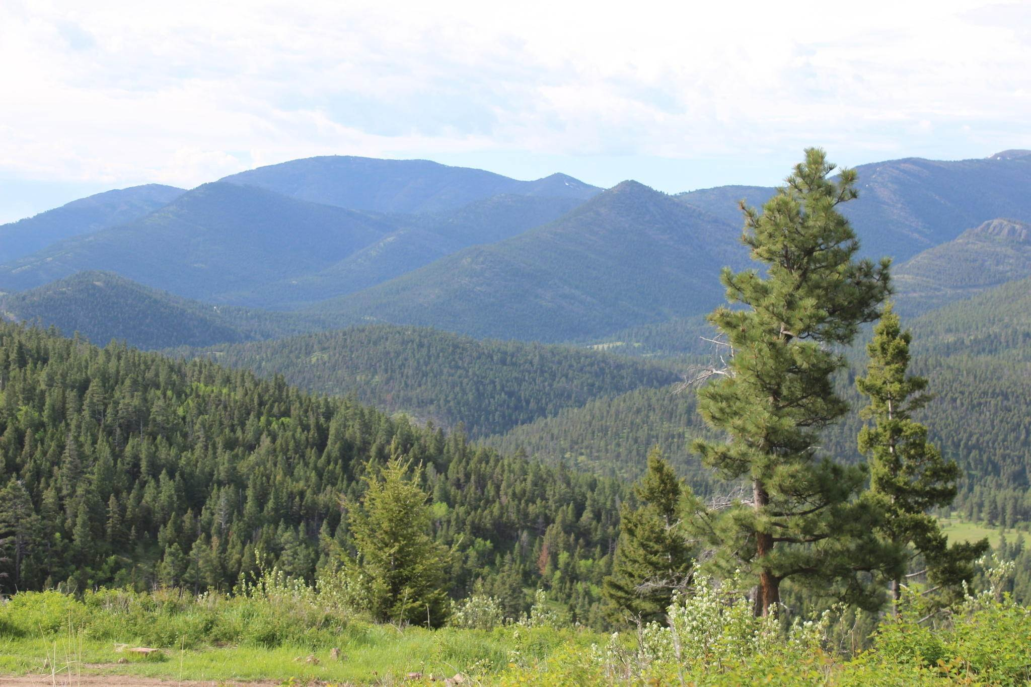 Land for Sale at 4270 Little Wolf Creek Road Wolf Creek, Montana 59648 United States