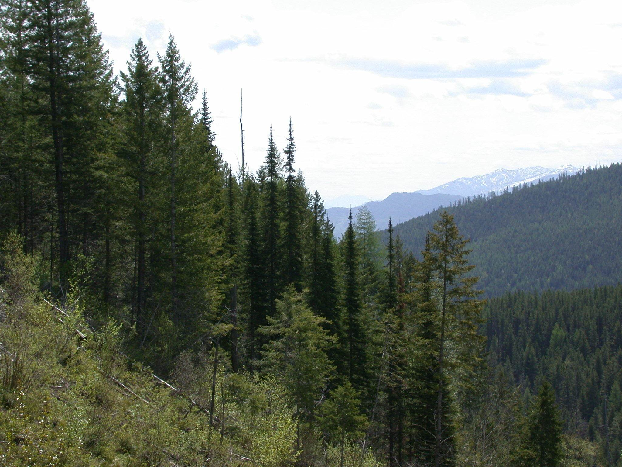 13. Land for Sale at Blankenship Road Columbia Falls, Montana 59912 United States