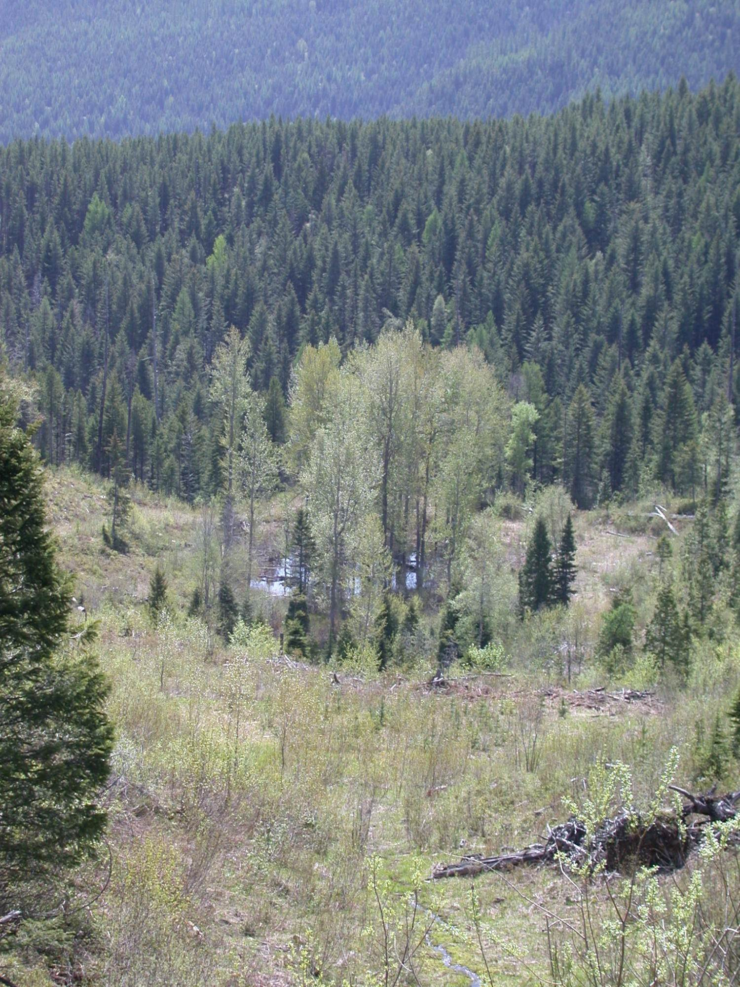 14. Land for Sale at Blankenship Road Columbia Falls, Montana 59912 United States