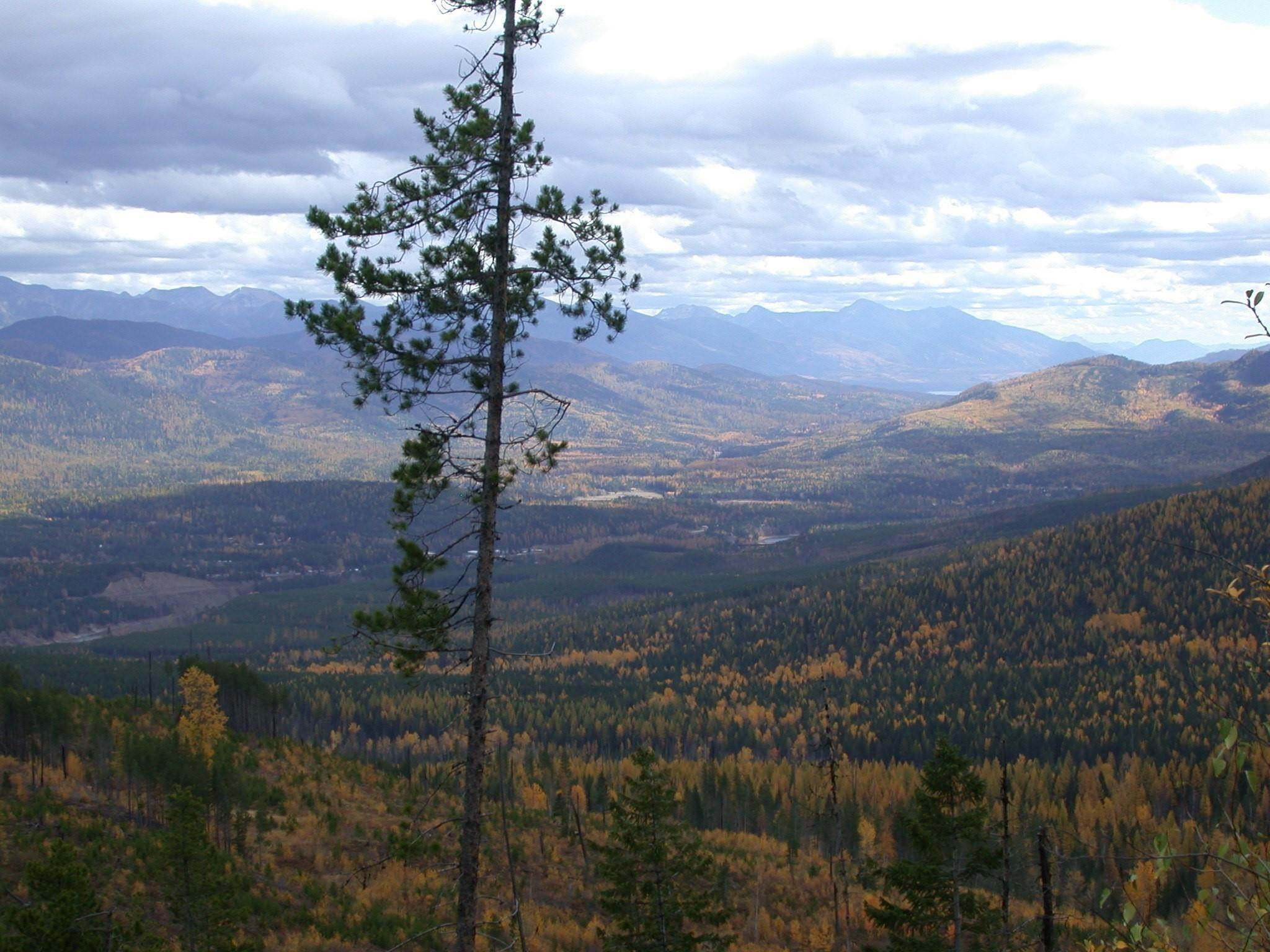 18. Land for Sale at Blankenship Road Columbia Falls, Montana 59912 United States