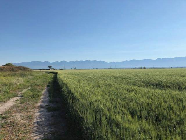 2. Land for Sale at 1040 Mt-82 Somers, Montana 59932 United States