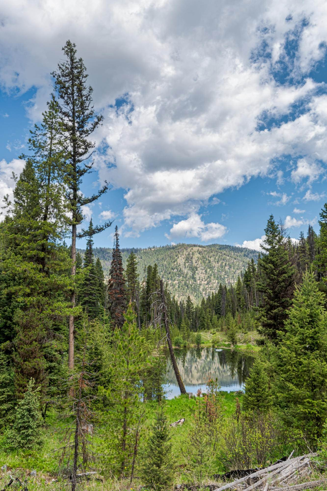 15. Land for Sale at 815 Hughes Creek Road Darby, Montana 59829 United States