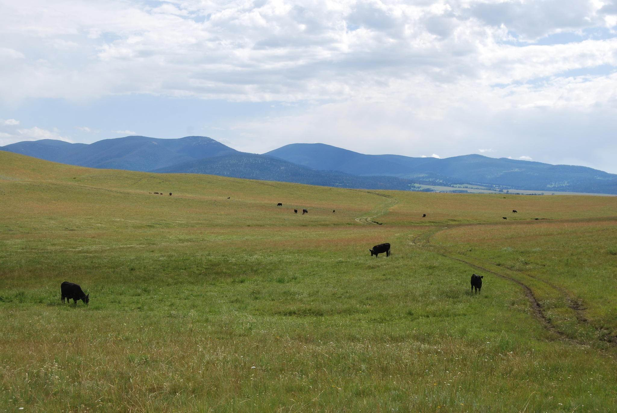 12. Farm / Agriculture for Sale at Nhn Mt-141 Avon, Montana 59713 United States