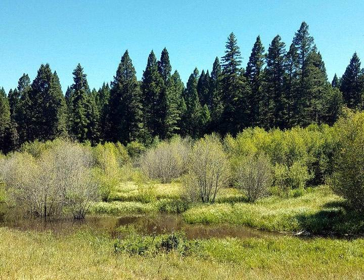 18. Land for Sale at 2261 South Mullan Trail Road Gold Creek, Montana 59733 United States