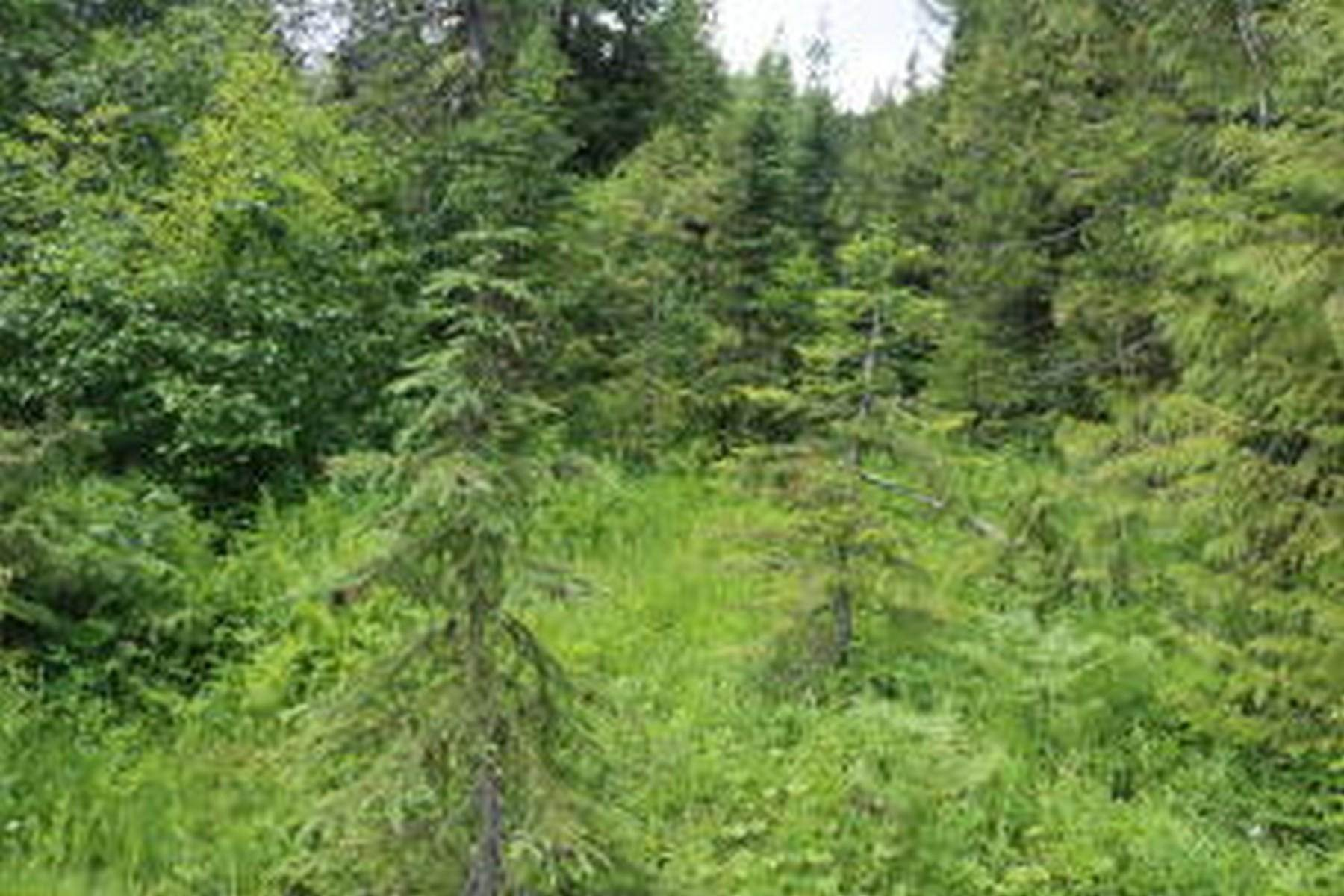 2. Farm and Ranch Properties for Sale at 114a Packer Creek Haugan, Montana 59842 United States