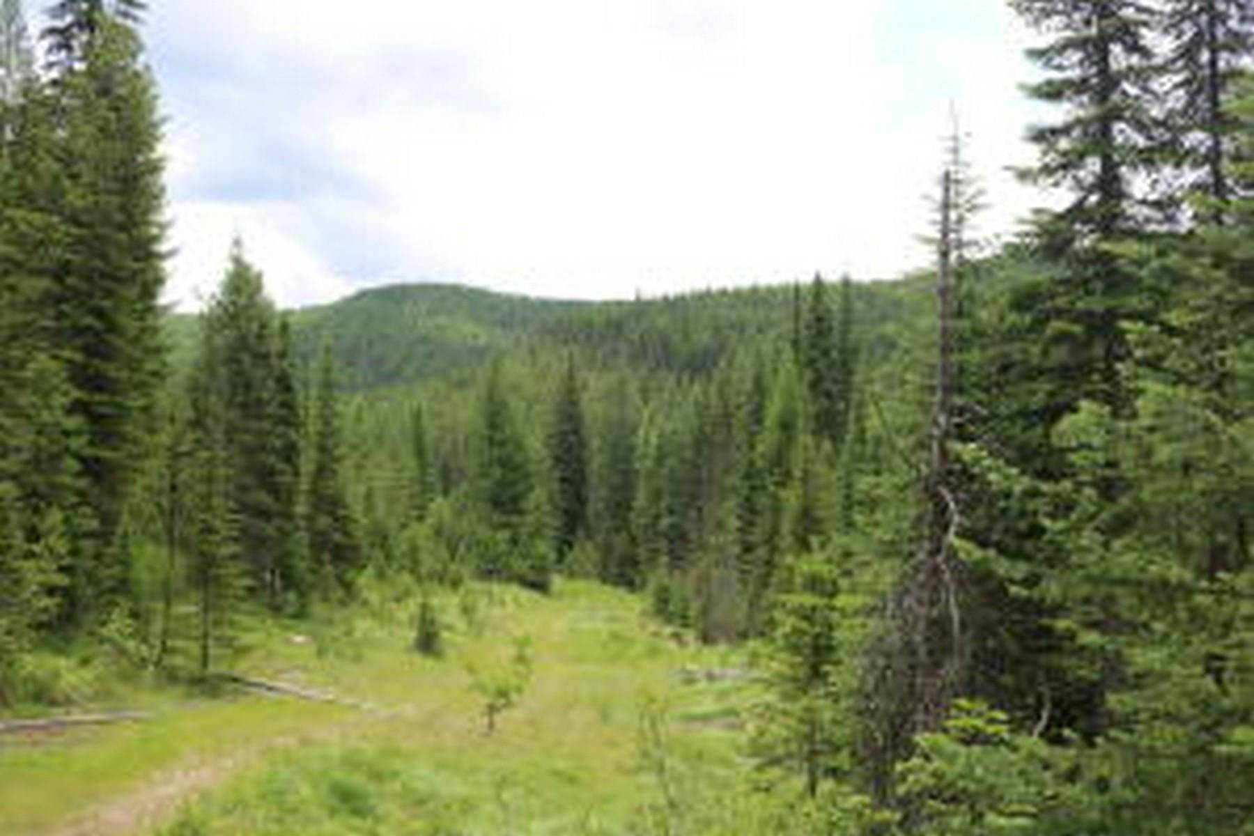 Property for Sale at 114a Packer Creek Haugan, Montana 59842 United States